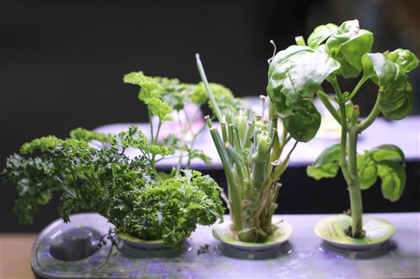 Middle School Campus Utilizing Hydroponic Gardens for First Time
