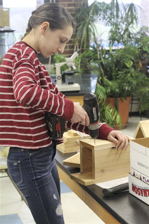 student builds bird house