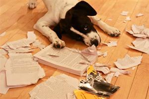 Dog Eats Book
